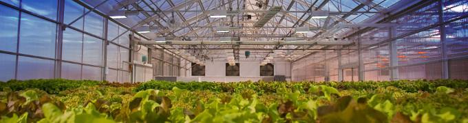 Энергосбережение в сельском хозяйстве - энергосберегающие лампы